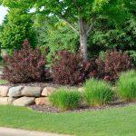 Łatwe w uprawie krzewy do ogrodu